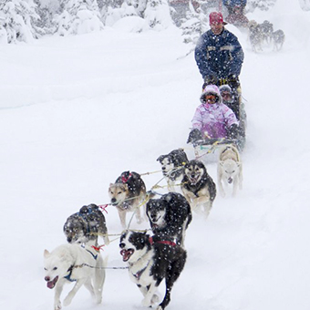 Dog Sledding - Photo: Big White Ski Resort
