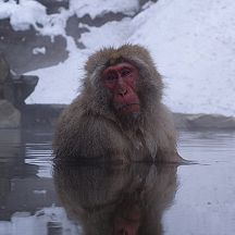Hot tubbin\' monkeys