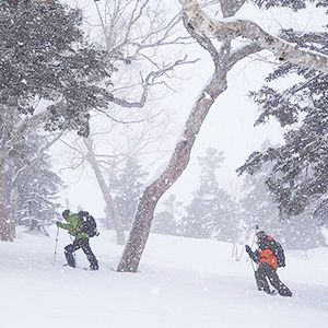 Evergreen Backcountry Day Tour - Hakuba