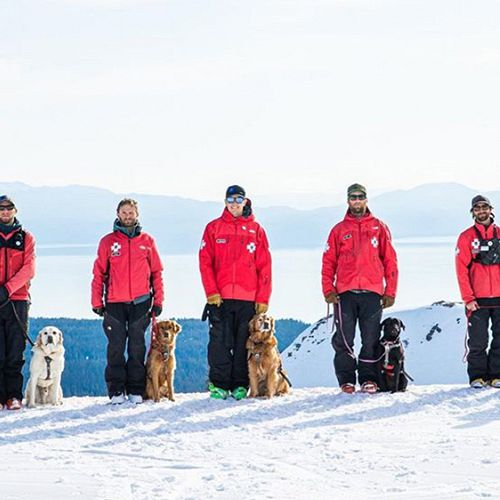 You say you want more ski patrol dogs?