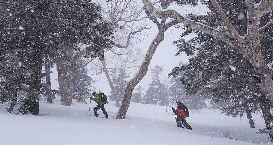 There are plenty of backcountry opportunities, this one in Hakuba. Photo: Scout