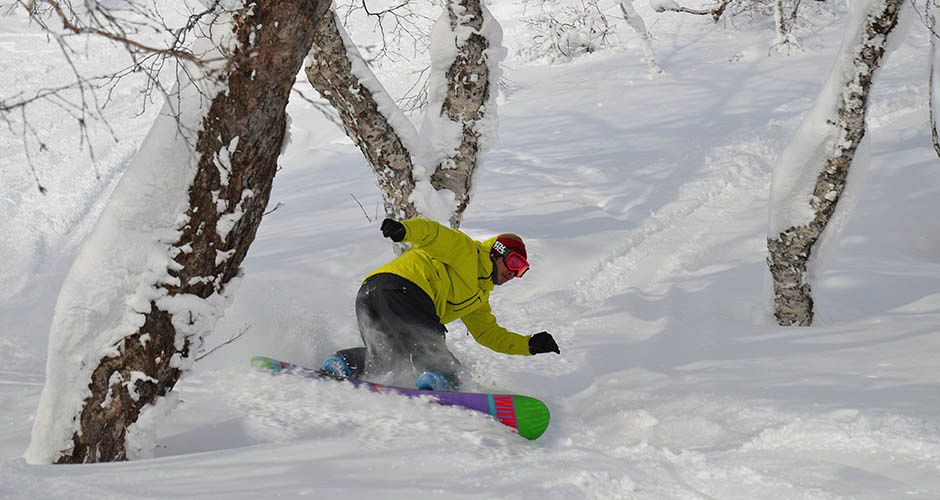 Powder in the Niseko trees. Photo: Niseko Village